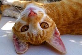 猫の行動8
