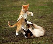 猫噛みつき5