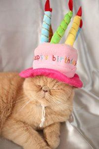 猫 誕生日56
