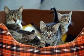 猫 出産4