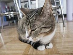 猫 玉ねぎ9