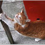猫が爪とぎをしない!その理由はなぜ?放置しても大丈夫!?
