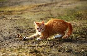 猫の行動6