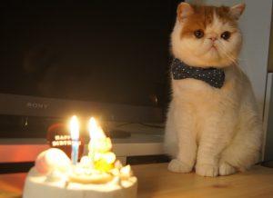 猫 誕生日7