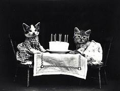 猫 誕生日1