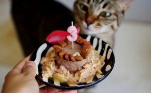 猫 誕生日12