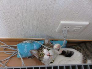 猫のしつけ 正しい方法7