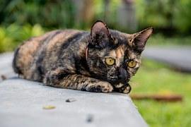 猫の柄 サビ2