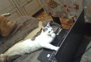猫の柄 グレートビ1
