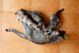 猫の出産1