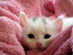 猫 出産12