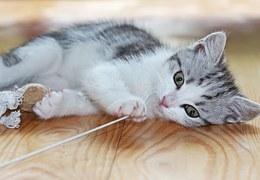 猫 なつく13