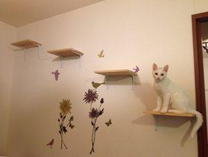 猫 自傷行為14