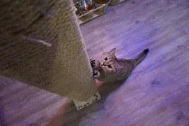 猫 自傷行為13
