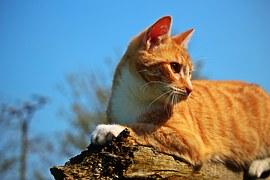 猫の柄 チャトラシロ1