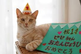 猫 誕生日13