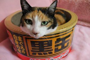 猫 誕生日28