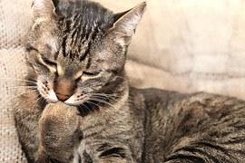 猫 自傷行為10