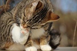 猫噛み付き6