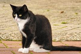 猫の柄 クロシロ5