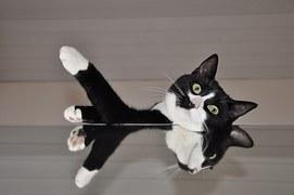 猫の柄 クロシロ2