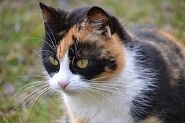 猫の柄 ミケ6