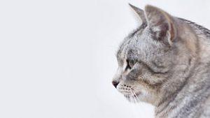 売れ残り猫3