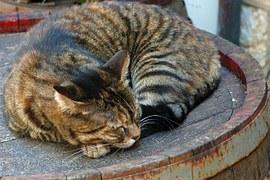 猫の柄 キジトラ1