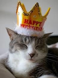 猫 誕生日4