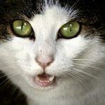 猫が小さい声や音を出さずに鳴く時はどんな意味がある!?