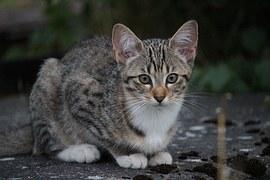 猫の柄 サバシロ1