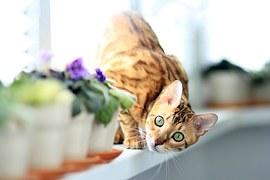 猫 自傷行為9