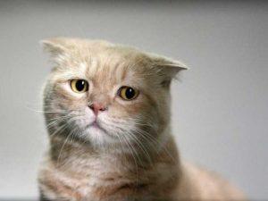 売れ残り猫9
