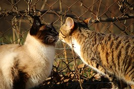 猫のさかり6