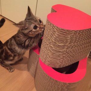 猫 誕生日31