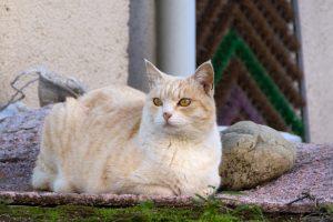 猫の柄 クリーム1