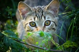 猫 自傷行為7