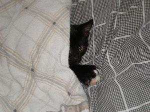 baby-cat-653885_960_720
