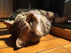 猫 自傷行為1