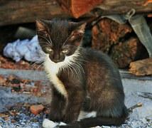 猫の柄 シロクロ3