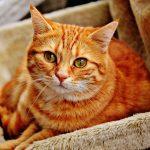 猫の粗相が治らない原因はなに?飼い主ができる対策とは!?