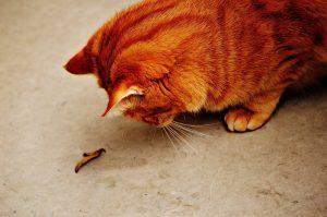 cat-1053882_1280