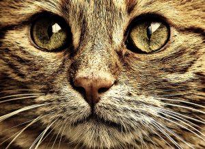cat-1054032_640