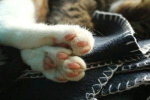 cat-1062584_960_720