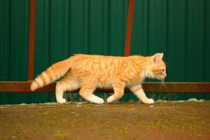 cat-1094292_1280