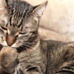 猫が喉を鳴らす4つの理由とは?病気の可能性はあるの?