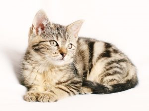 cat-1192026_960_720
