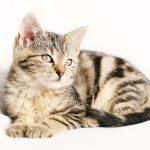 猫の体重が増えない時の原因は?飼い主はどう対処するべき?