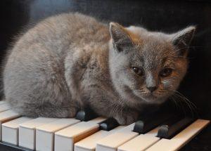 cat-1248012_960_720