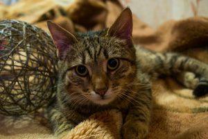 cat-1268771_960_720